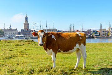 Koe aan de IJssel voor de skyline van Kampen van Sjoerd van der Wal