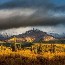 Herfst landschap in het Denali nationaal park in breedbeeld van Chris Stenger