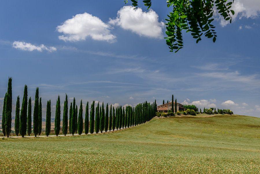 Cipressen in Toscane van Erwin Maassen van den Brink