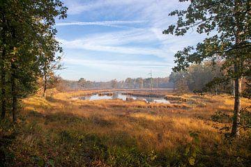 Sumpfvögel von Ton Tolboom
