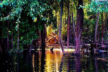 Tropische bomen in het moeras van de Amazone in Peru, Zuid-Amerika van John Ozguc