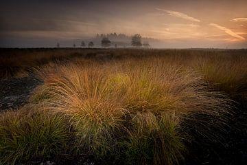 Mistige zonsopkomst Renderklippen von Jenco van Zalk