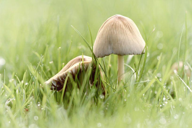 paddenstoeltjes in het gras-2 van Yvonne Blokland