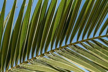 Palm blad von Irene Lommers