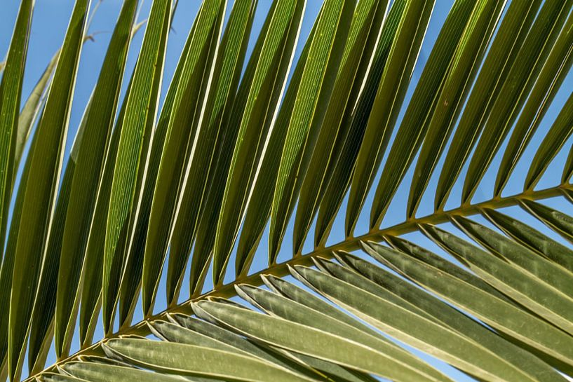 Palm blad van Irene Lommers