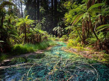 Nieuw-Zeeland - Rotorua - Een tropische rivier in een sequoia-bos van Rik Pijnenburg