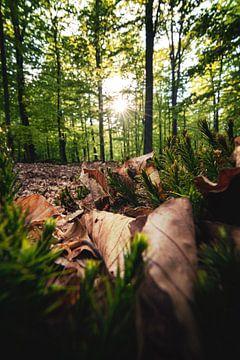 Bosgrond met bladeren en mos van Florian Kunde