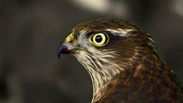 The Sparrow Hawk van Daniel van Vliet