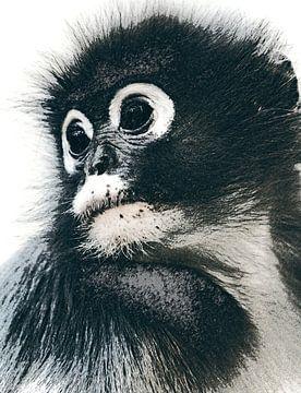 Portret van een lief aapje van Nannie van der Wal