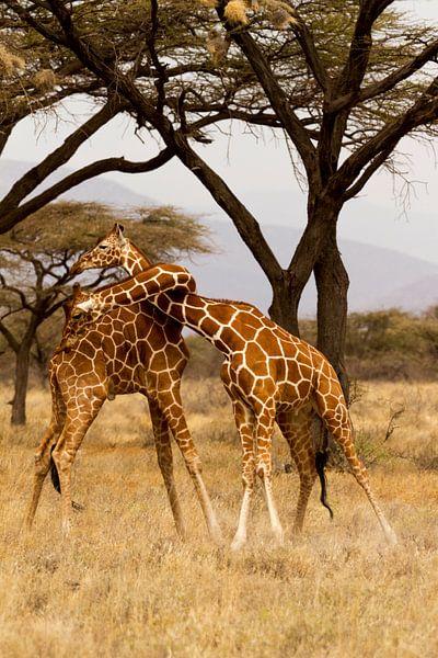 Strijdende Giraffen van Van Renselaar Fotografie
