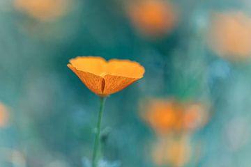 es ist fast wie gemalte Blumenkunst von Mike Bot PhotographS