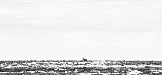 Gemsbok Walking Through Etosha's Plains