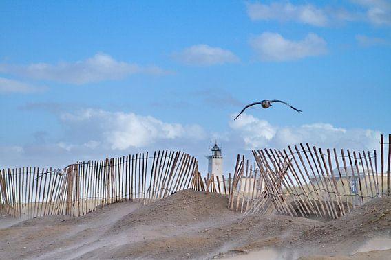 Vuurtoren, strandhek, meeuw