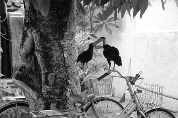 Kip op fiets van Marieke van Milligen