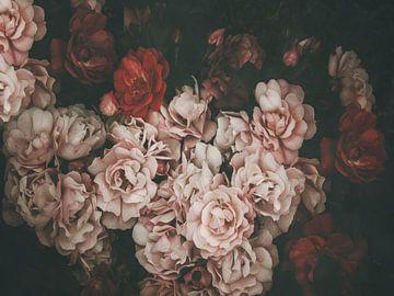 Roses sombres sur Marina de Wit