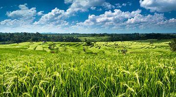 Rijstplantage Jatiluwih van Karin vd Waal