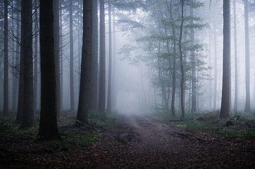 Ätherische Natur von Tvurk Photography