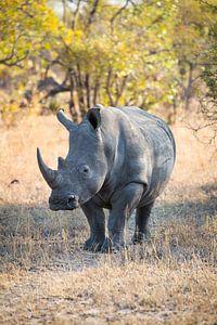Rhino Portrait I van Thomas Froemmel