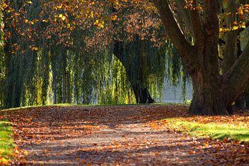 colourful autumn van Bernd Hoyen