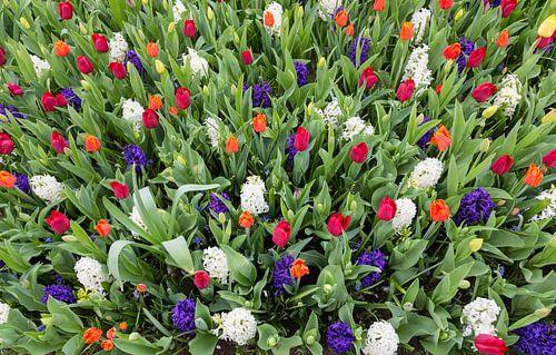 Blumen Feld voller bunter Blumen wie Tulpen und Hyazinthen