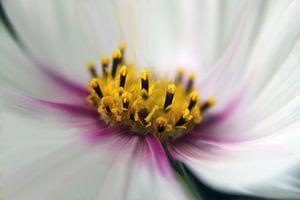 Blütentraum van