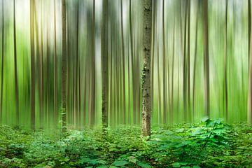 Forêt verte sur