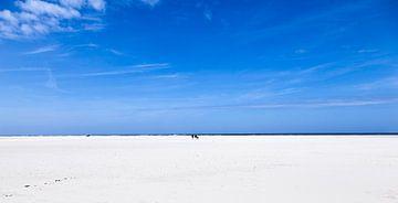 Dutch isle of Texel sur