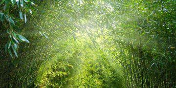 zon in het idyllische bamboebos van Dörte Stiller