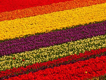 Tulpenfeld von Dietjee FoTo
