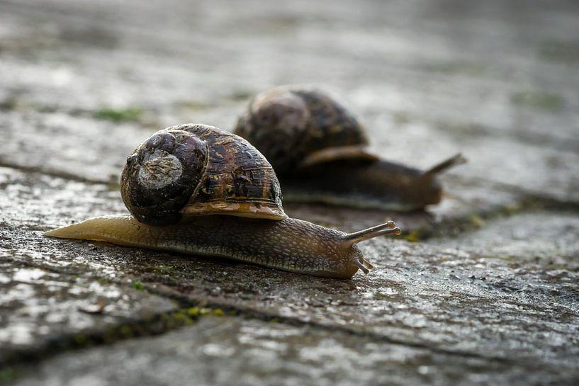 Slakken Race von Wouter Hollanders