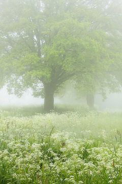 Mistige lente ochtend in de Mortelen met veel bloeiende Fluitenkruid. van Jos Pannekoek