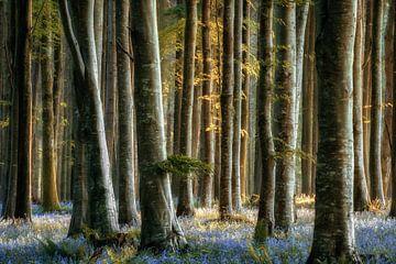 Schöneheit des Blaus, Großbritannien von Lars van de Goor