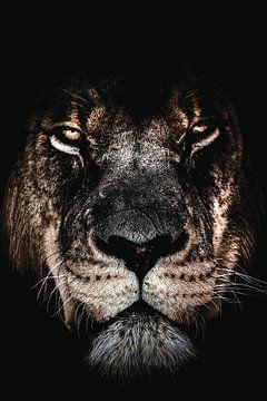 Dark lion | Donkere leeuw - Leeuw - Portret - Afrika - Roofdier - Dier - Dieren - Leeuwen van Hendrik Jonkman
