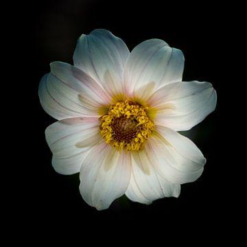 Eenzaam wit van Brian Taylor