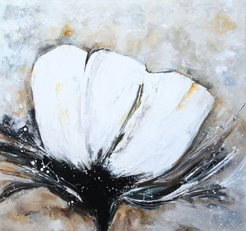 Weißer Mohn von Claudia Neubauer