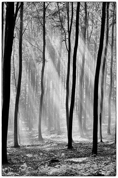A Glimmer of Hope - Black&White van Ernst van Voorst