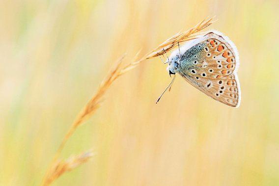Kleurrijk vlindertje van Paul Arentsen