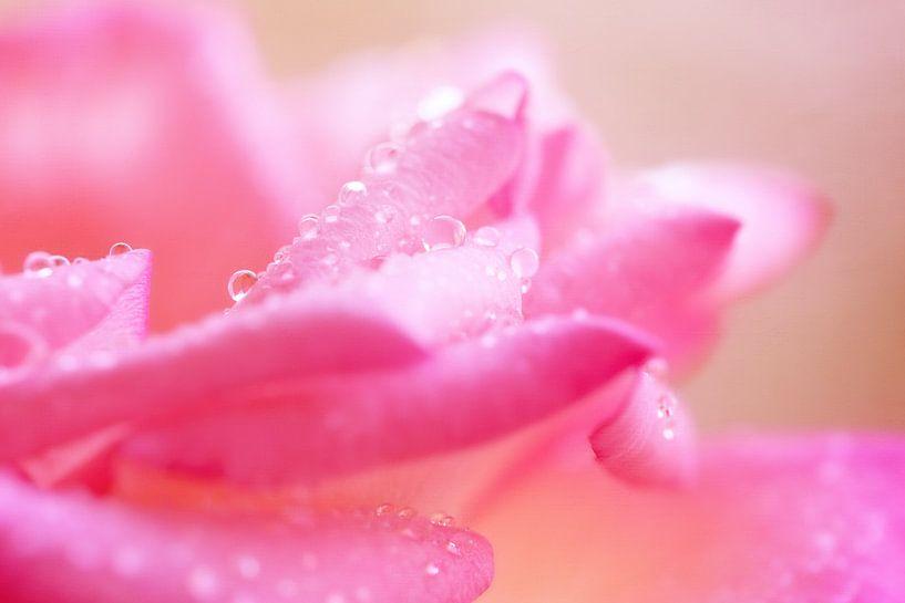 Rose petals.. van LHJB Photography