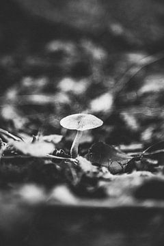Schwarz-Weiß-Pilz auf Film, das ultimative Herbstbild! von Evelien Lodewijks