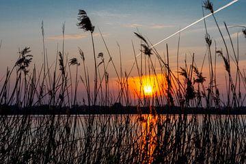 Zonsondergang achter het riet van Foto Danielle