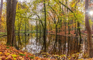 Herbst auf der Veluwe im Wald von Löwen von Christiaan de Graaf