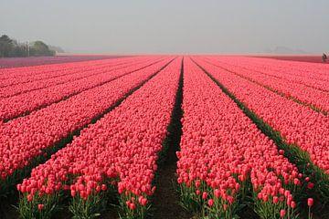 Het tulpenveld in het  Zand van Jan Mulder