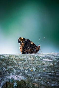 Schmetterling von Jayzon Photo