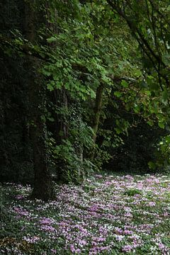 Bos met anemonen van Herman Peters