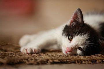 Jong katje van