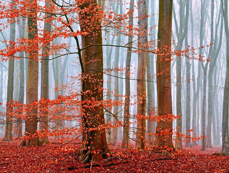 Winter-Woods van Caroline Lichthart