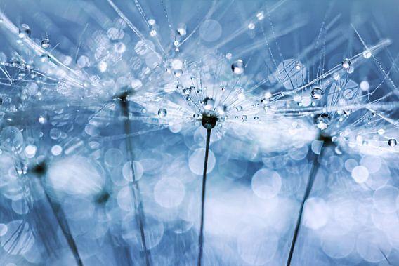 Blowball Bokeh Boogie.... (pluis, lente, druppel, water, paardebloem, bloem) van Bob Daalder