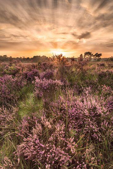 Zonsondergang Kalmthoutse Heide