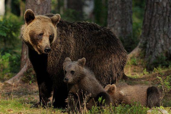 Moederbeer met jongen