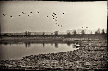 Nostalgische Vogels van Daniel Delight